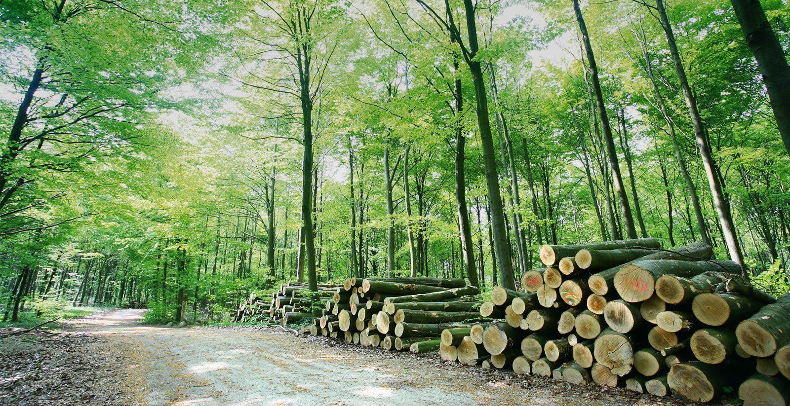 woodee - aus nachhaltigen Rohstoffen